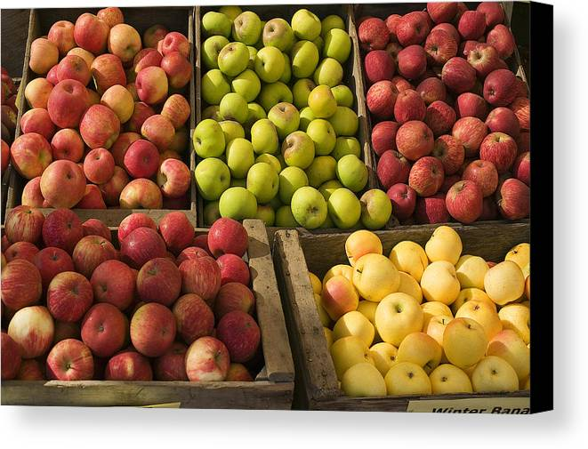 Apple Canvas Print featuring the photograph Apple Harvest by Garry Gay