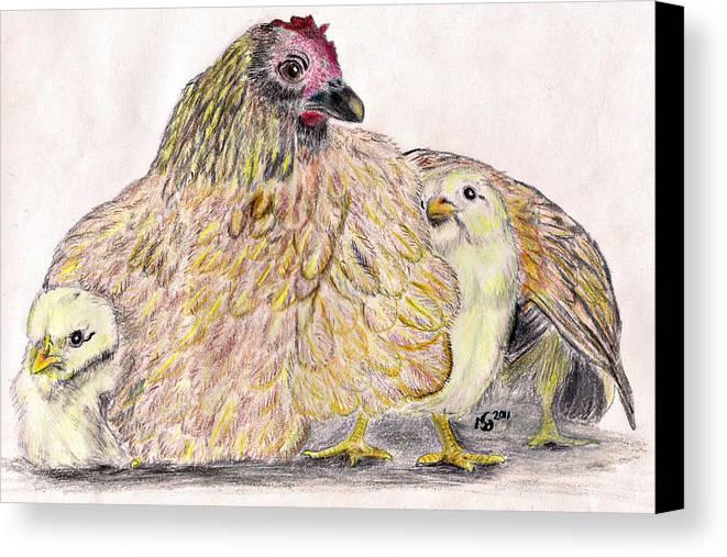 Chickens Canvas Print featuring the drawing As A Hen Gathereth Her Chickens Under Her Wings by Marqueta Graham