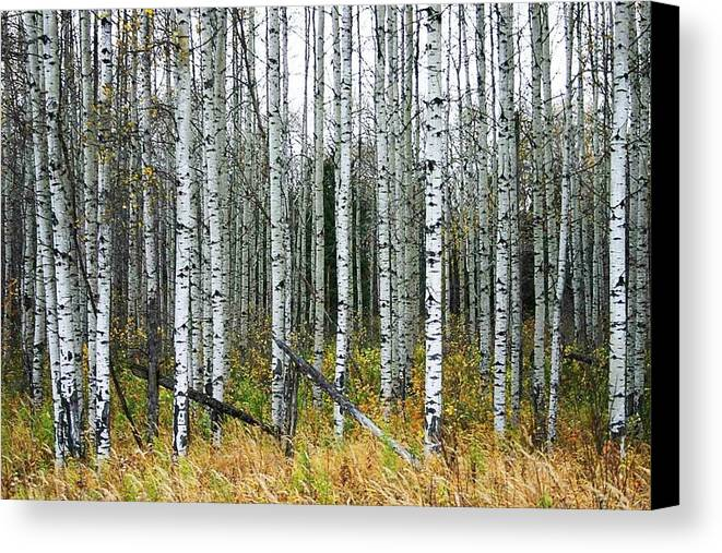 Aspens Canvas Print featuring the photograph Aspens by Nelson Strong