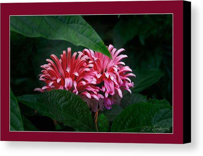 Flowers Canvas Print featuring the photograph At Center by Richard Gordon