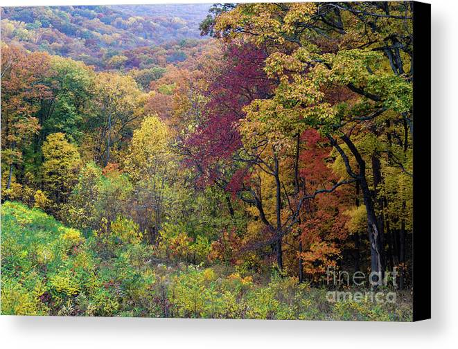 Brown Canvas Print featuring the photograph Autumn Arrives In Brown County - D010020 by Daniel Dempster