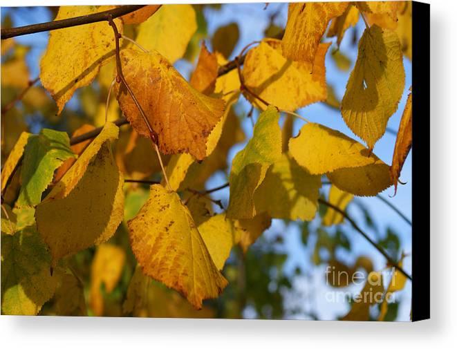 Autumn Canvas Print featuring the photograph Autumn by Carol Lynch