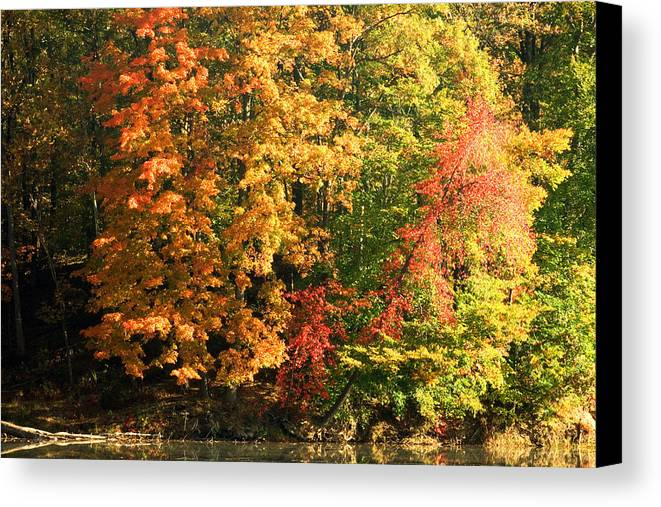 Autumn Canvas Print featuring the photograph Autumn Colors II by Amanda Kiplinger
