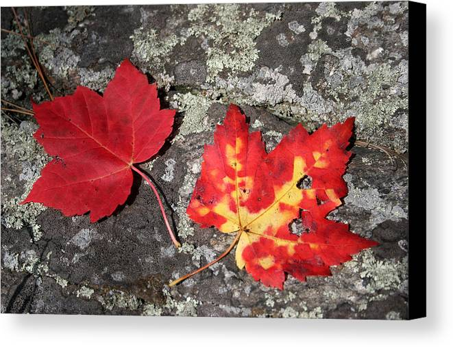 Tranquility Canvas Print featuring the photograph Autumn Colors by Kate Leikin