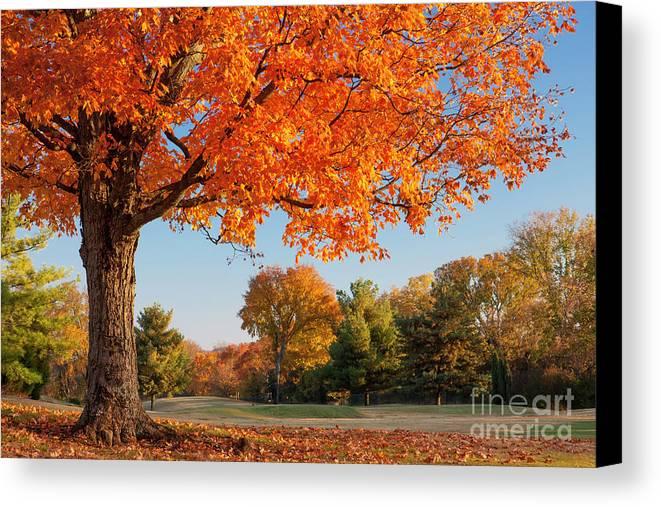 Autumn Canvas Print featuring the photograph Autumn Dawn by Brian Jannsen