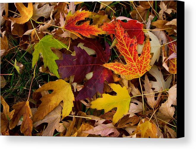 Leaves Canvas Print featuring the photograph Autumn Leaves by James BO Insogna