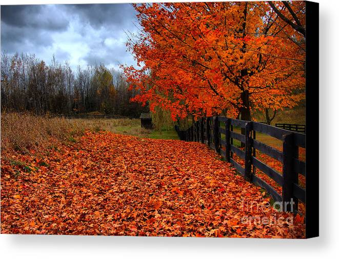 Autumn Canvas Print featuring the photograph Autumn Leaves by Joe Ng