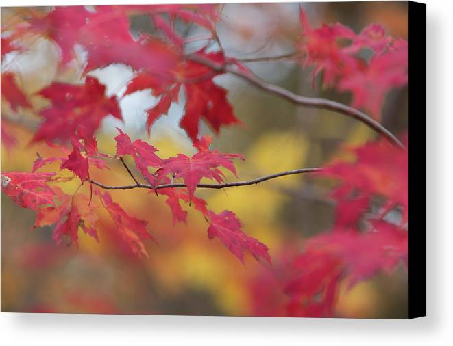 Autumn Canvas Print featuring the photograph Autumn Leaves by Richard Pope
