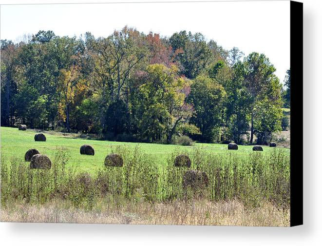 Landscapes Canvas Print featuring the photograph Autumn Pastures by Jan Amiss Photography