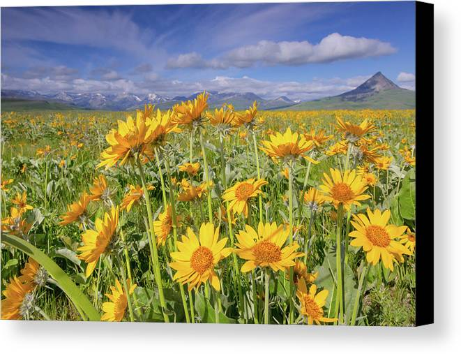 Balsam Canvas Print featuring the photograph Balsam On The Rocky Mountain Front by Jack Bell