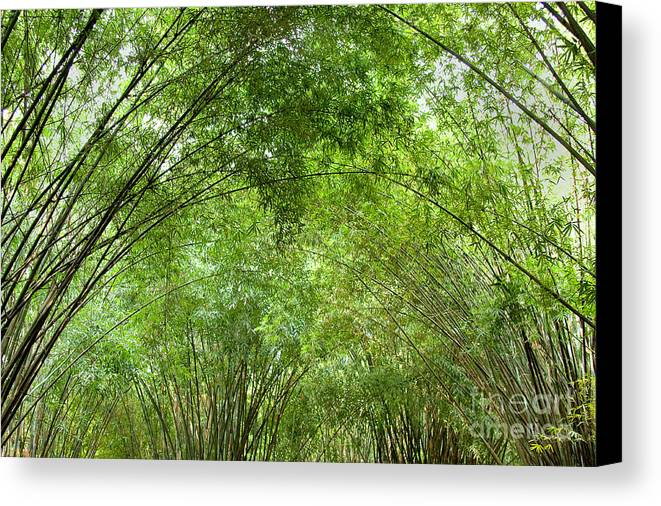 Nature Canvas Print featuring the photograph Bamboo Trees In Wangjianglou Park In Chengdu China by Julia Hiebaum