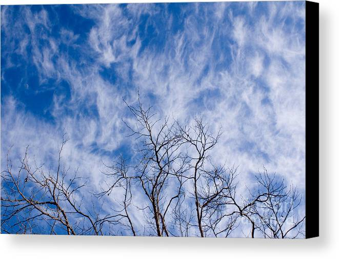 Nature Canvas Print featuring the photograph Bare Winter Branches In California by Julia Hiebaum