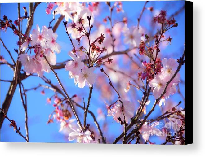 Adrian-deleon Canvas Print featuring the photograph Beautiful Blossoms Blooming For Spring In Georgia by Adrian DeLeon