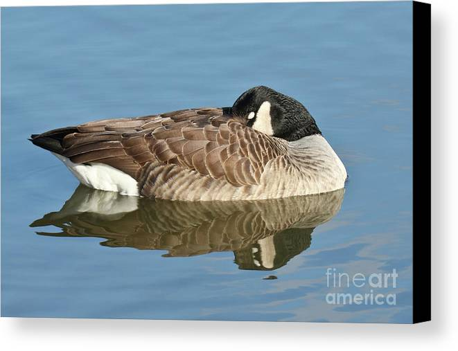 Christian Canvas Print featuring the photograph Beauty At Rest by Anita Oakley