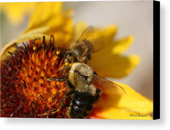 Bee Canvas Print featuring the photograph Bee Two by Silvana Siudut