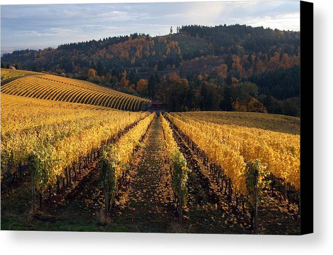 Wine Canvas Print featuring the photograph Bella Vida Vineyard 1 by Sherrie Triest
