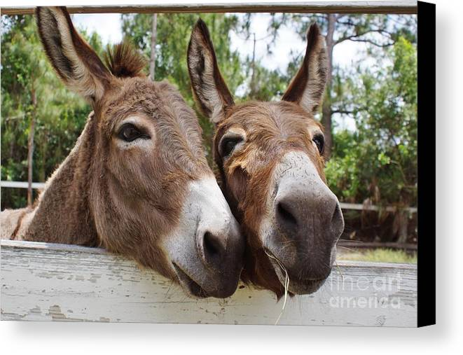 Donkey Canvas Print featuring the photograph Best Buddies 2 by Wibada Photo