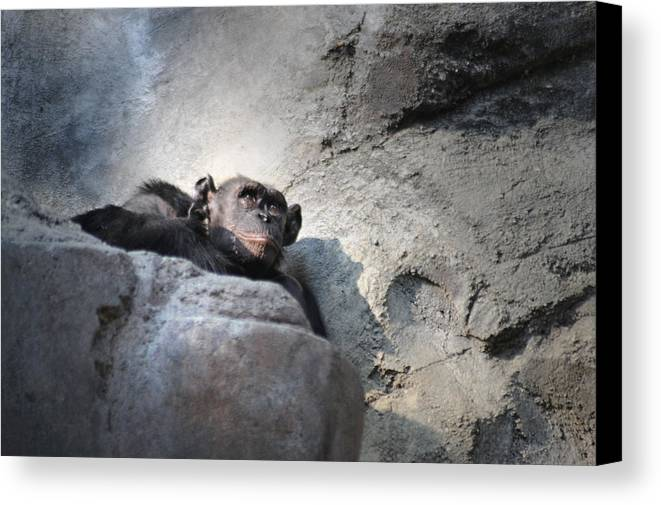 Animal Canvas Print featuring the photograph Between by Dan Holm