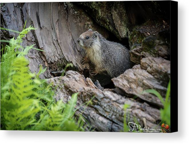 Big Tree Trail Canvas Print featuring the photograph Big Tree Trail - Marmot - Sequoia National Park - California by Ryan Kelehar