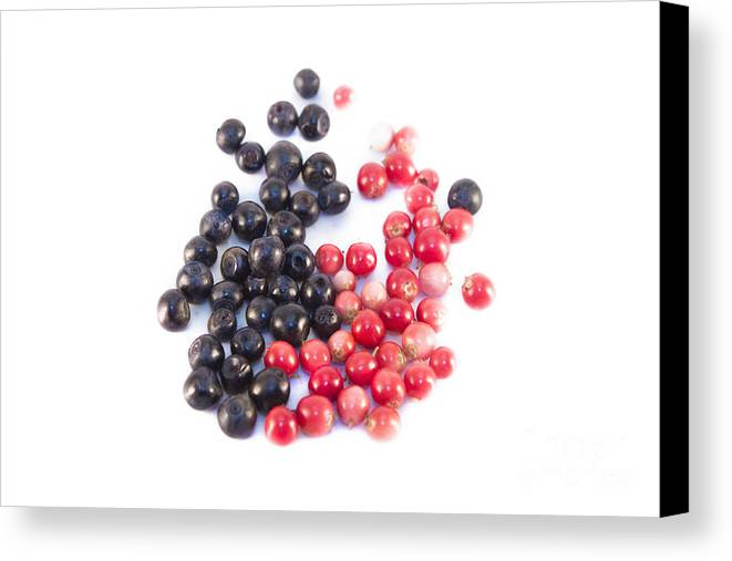 Vaccinium Vitis-idaea Canvas Print featuring the photograph Bilberries And Cowberries Isolated by D R