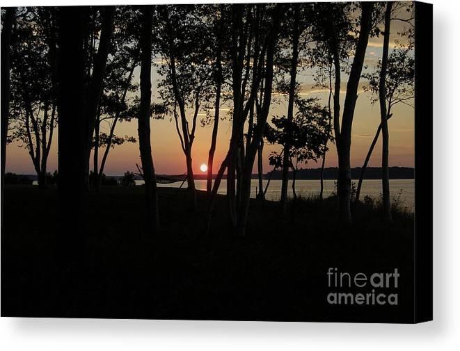 Birch Canvas Print featuring the photograph Birches Watch The Sunset by Faith Harron Boudreau