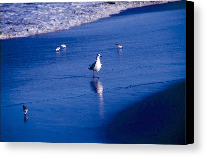 Ocean Canvas Print featuring the photograph Bird At Ocean's Tide by George Ferrell