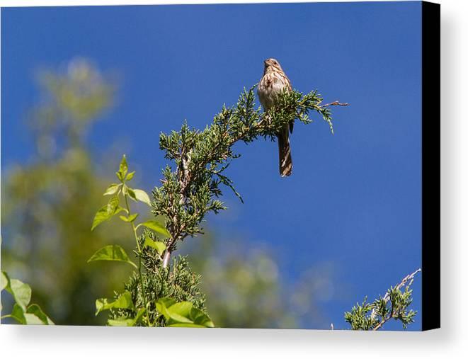 Bird Canvas Print featuring the photograph Bird On A Branch by Jeff Cutler