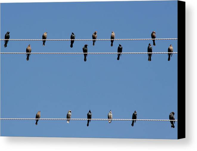Birds Canvas Print featuring the photograph Bird On A Wire by Christine Till