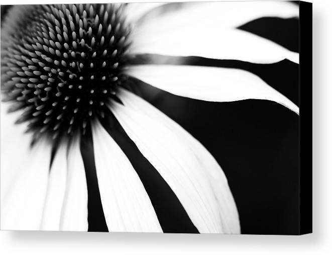 Horizontal Canvas Print featuring the photograph Black And White Flower Maco by Copyright Johan Klovsjö