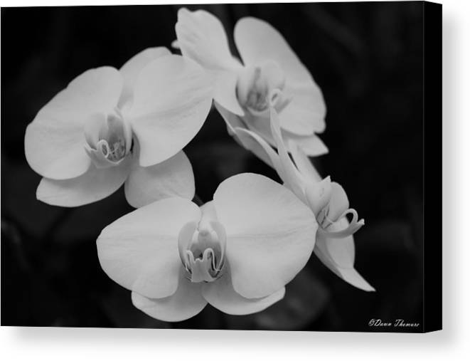 Orchids Canvas Print featuring the photograph Black And White Orchids by Dawn Thomure
