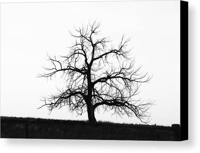 Black And White Canvas Print featuring the photograph Black And White Single Tree by Mike Loudermilk
