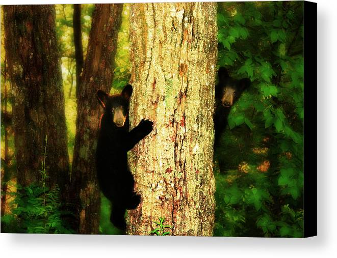Black Bear Cubs Canvas Print featuring the photograph Black Bear Cubs by Gray Artus
