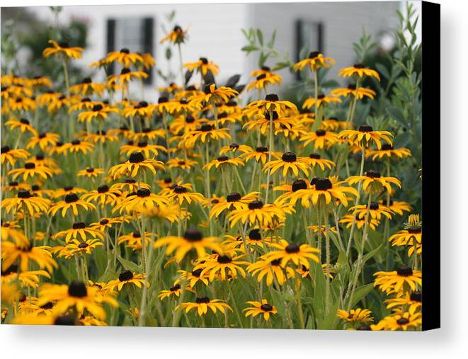 Flowers Canvas Print featuring the photograph Black Eyed Susans by Karen Fowler