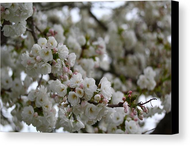Flowers Canvas Print featuring the photograph Bloosome by Kanlayanee Irek