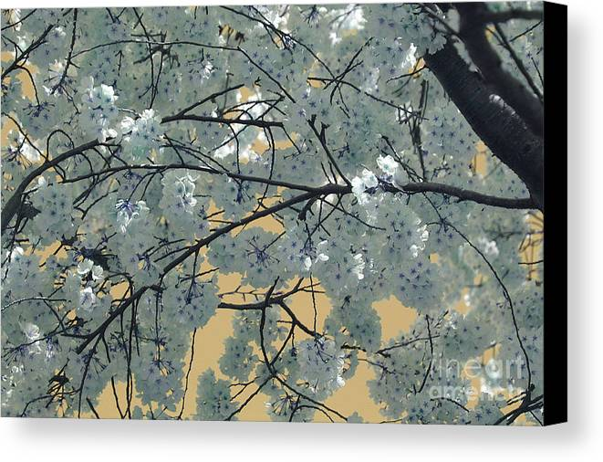 Blossoms Canvas Print featuring the photograph Blossoms by Katherine Morgan