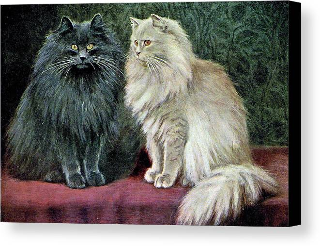Cats Canvas Print featuring the painting Blue And Cream Persians by W Luker Junior