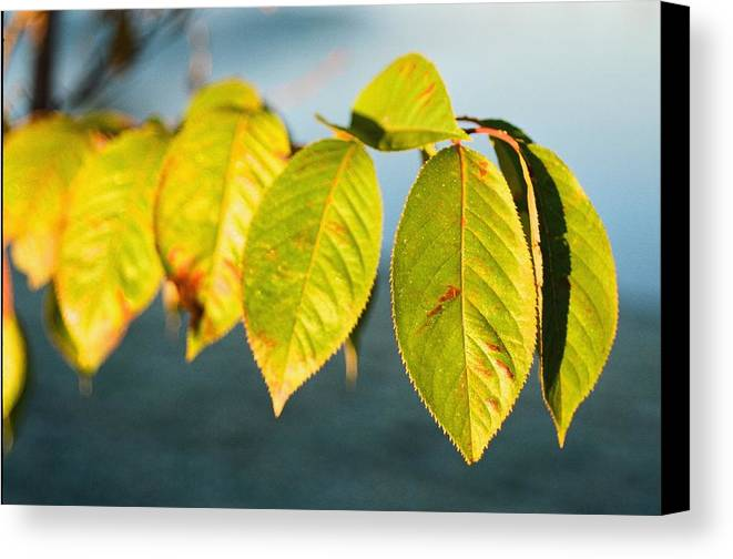 Blue Canvas Print featuring the photograph Blue And Green by Jonathan Michael Bowman