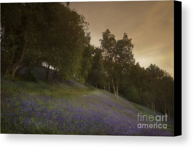 Bluebell Canvas Print featuring the photograph Bluebells by Angel Ciesniarska