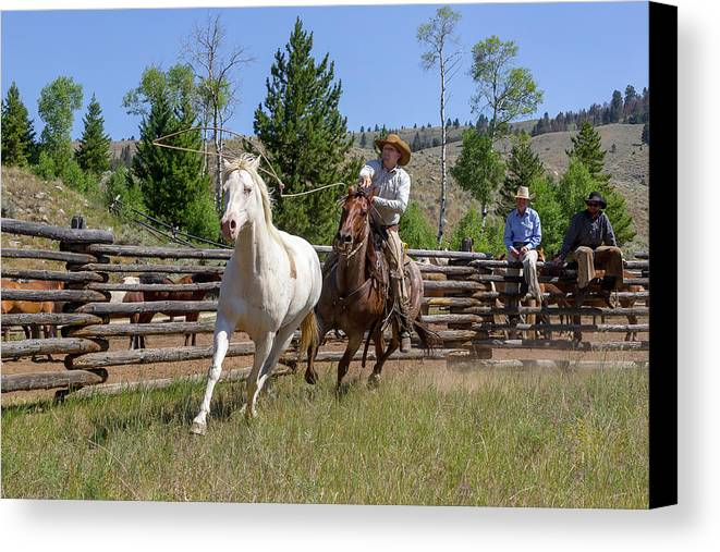 Cowboy Canvas Print featuring the photograph Bronc Roper by Jack Bell