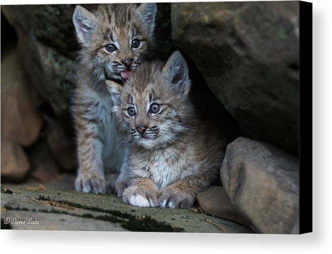 Lynx Canvas Print featuring the photograph Brothers by Steven Szabo