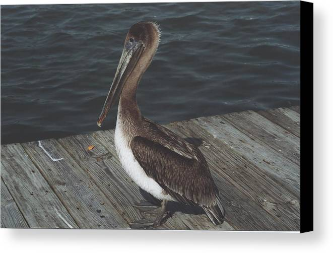 Bird Canvas Print featuring the photograph Brown Pelican On Pier 2 by Wendell Baggett