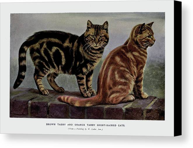 Cats Canvas Print featuring the painting Brown Tabby And Orange Tabby by W Luker Junior