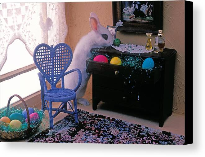 Bunny Canvas Print featuring the photograph Bunny In Small Room by Garry Gay