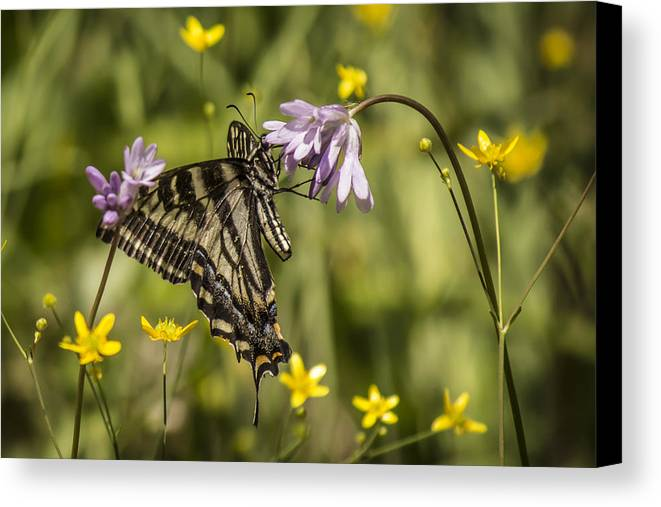 Canvas Print featuring the photograph Butterfly 10 by Reed Tim