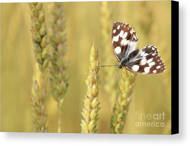 Butterfly Canvas Print featuring the photograph Butterfly by Jana Behr