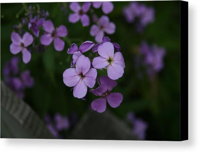Flowers Canvas Print featuring the photograph Calm In The Storm by Alan Rutherford