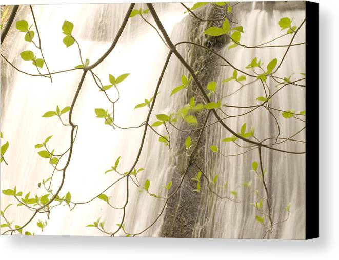 Nobody Canvas Print featuring the photograph Cascade Falls Rushes Down Cascade by Phil Schermeister