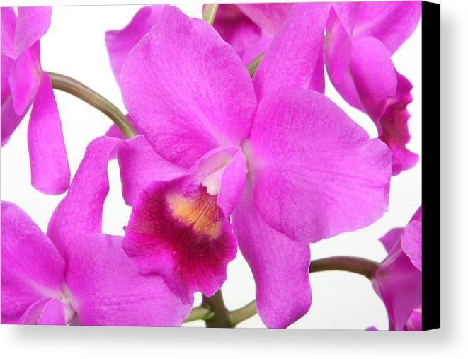 Cattleya Canvas Print featuring the photograph Cattleya Orchid by Lynn Berreitter