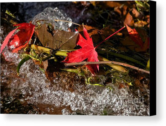 Leaves Canvas Print featuring the photograph Caught In The Waterfall by Susie Peek
