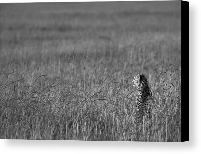 Cheetah Canvas Print featuring the photograph Cheetah by Andy Bitterer